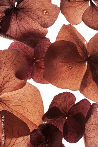 kwiaty-zblizenie-streszczenie-tlo