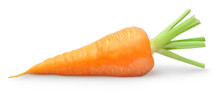 Isolated Carrot. One Fresh Carrot With Green Stem Isolated On White Background