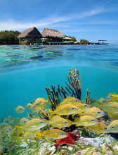 A Tropical Restaurant Over The Water And A School Of Fish Underwater, Split Image, Caribbean Sea, Panama, Central America