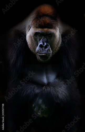 Photo  Portrait of gorilla