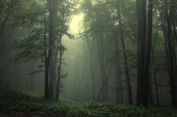 fototapeta zielony las po deszczu
