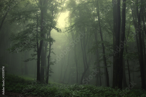 Foto op Plexiglas Bos in mist Green forest after rain