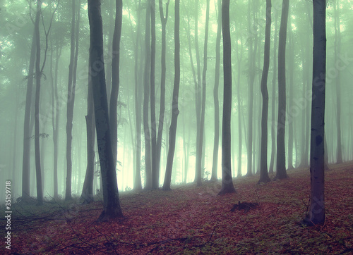 Spoed Foto op Canvas Bos in mist fog in a beautiful forest