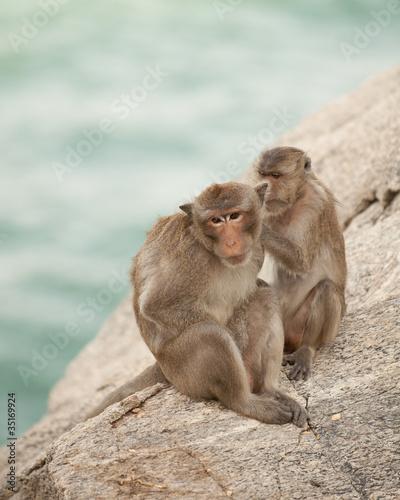In de dag Family of monkeys love