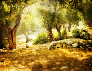 Panel Szklany Drzewa Olive Trees