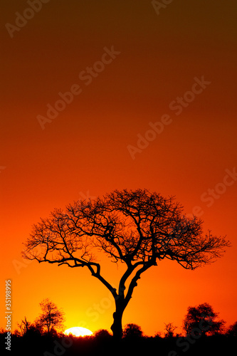 Stickers pour porte Orange eclat A marula tree silhouette at sunset