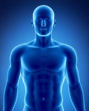 Male Figure In Anatomical Posi...
