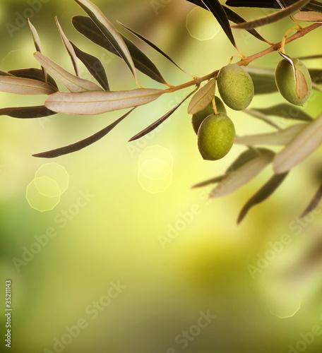 Fototapeta do kuchni Olives border design