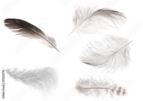set of five isolated feathers