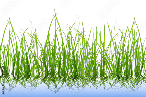 Montage in der Fensternische Gras grüne Wiese