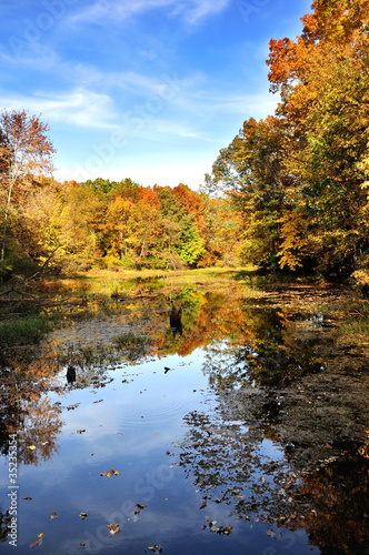 Foto op Canvas Bomen autumn forest by the lake