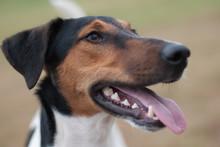 Cute Terrier Portrait