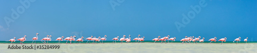 Photo sur Toile Flamingo Pink flamingos panorama