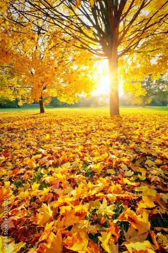 Fototapeta jesień slonce-miedzy-drzewami-w-jesiennym-lesie