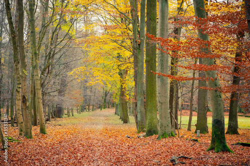 pathway-in-the-autumn-forest