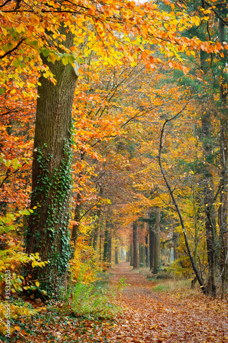 Photo Stands Road in forest Colorful autumn