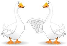 Oche Fumetto Parlando-Goose Duck Talking-Vector