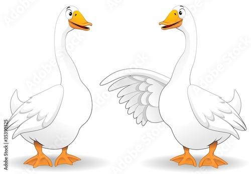 Tela Oche Fumetto Parlando-Goose Duck Talking-Vector