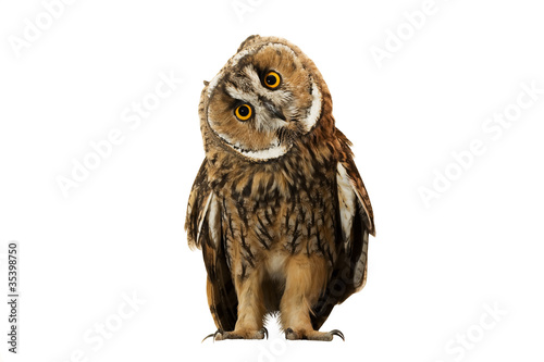 Spoed Fotobehang Uil owl isolated on white background