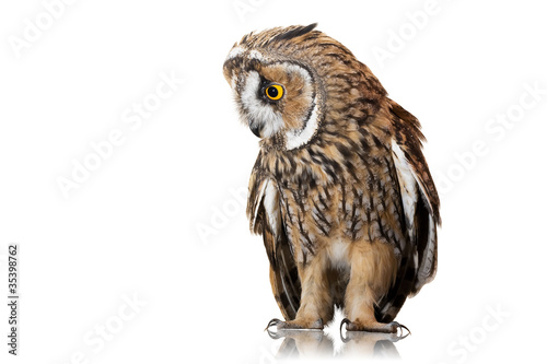 Deurstickers Uil owl isolated on white background