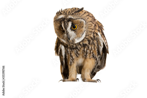 Fotobehang Uil owl isolated on white background