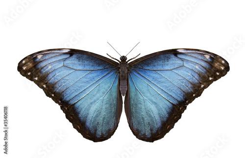 Obraz na plátně Mariposa Caligo Memmon isolada.