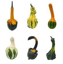 Colorful Gourd