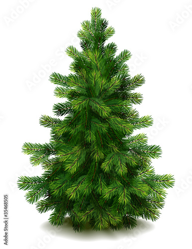 Fotografía Pine tree