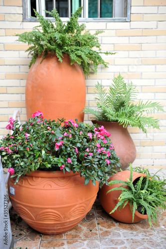Fototapeta pot with plants obraz na płótnie