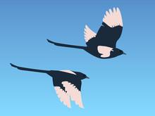 Magpies In Flight