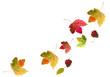 Leinwandbild Motiv bunte Ahornblätter fallen im Herbst