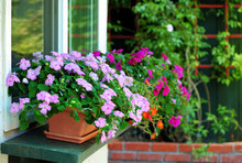 Window Boxes And Flower Pots