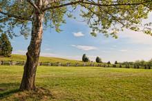 Lone Tree At Manassas Battlefield