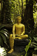 The mercy of Golden Buddha