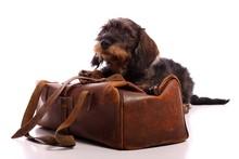 Junger Hund Dackel Mit Tierarztkoffer