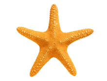 Big Yellow Sea-star Isolated O...