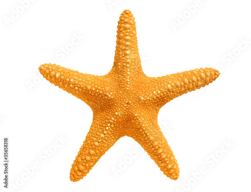 Fototapeta big yellow sea-star isolated on white background