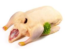 Frische Ente