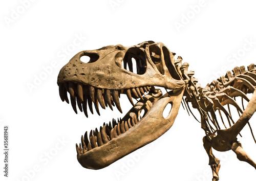 Photo  Esqueleto de tiranosaurio Rex