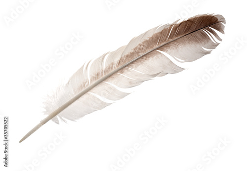brown and white goose feather