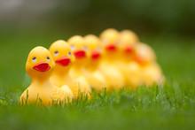 Rubber Ducks In The Grass