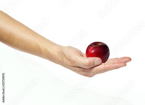 Mano che tiene una mela rossa, fondo bianco Canvas Print