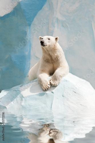Staande foto Ijsbeer Polar bear in a zoo