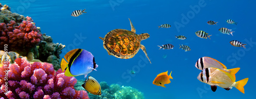 Foto op Canvas Onder water Underwater panorama with turtle, coral reef and fishes. Sharm el