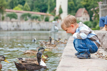 Cute Little Boy Feeding Ducks