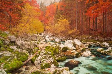 Panel Szklany Rzeki i Jeziora Golden autumn mountain forest with turquoise brook.