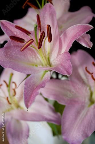 rozowe-kwiaty-na-bialym-tle-na-czarnym-tle