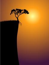 Single Lonely Tree On A Precipice, Sun In A Fog