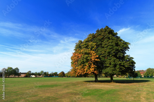 Trees in Cranfield, Bedford Canvas Print