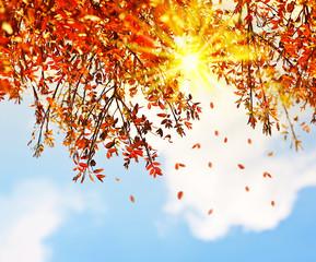 FototapetaBeautiful autumn tree leaves background border
